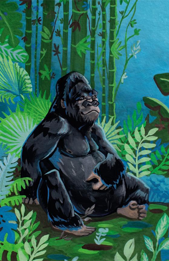 illustration bannière Kajue