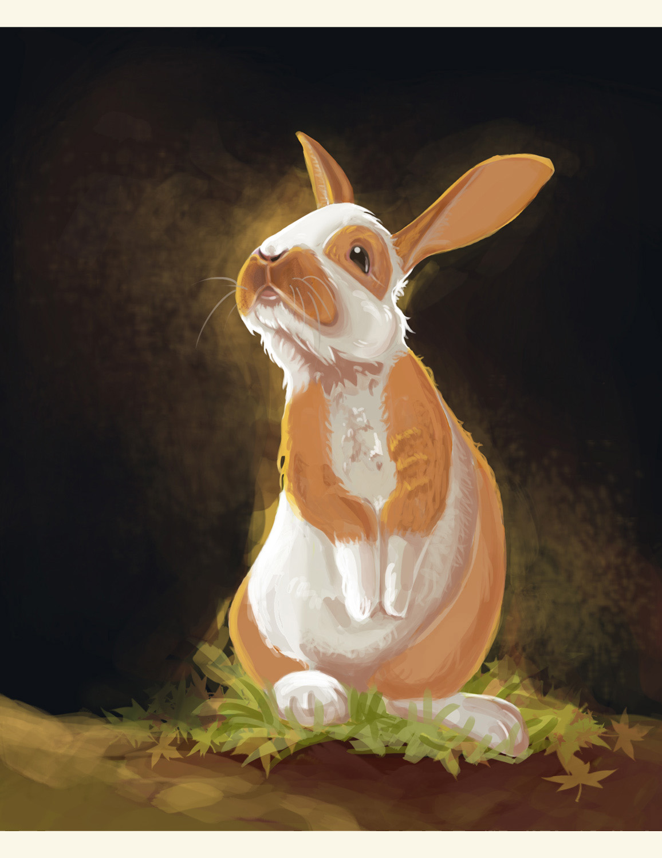 illustration lapin