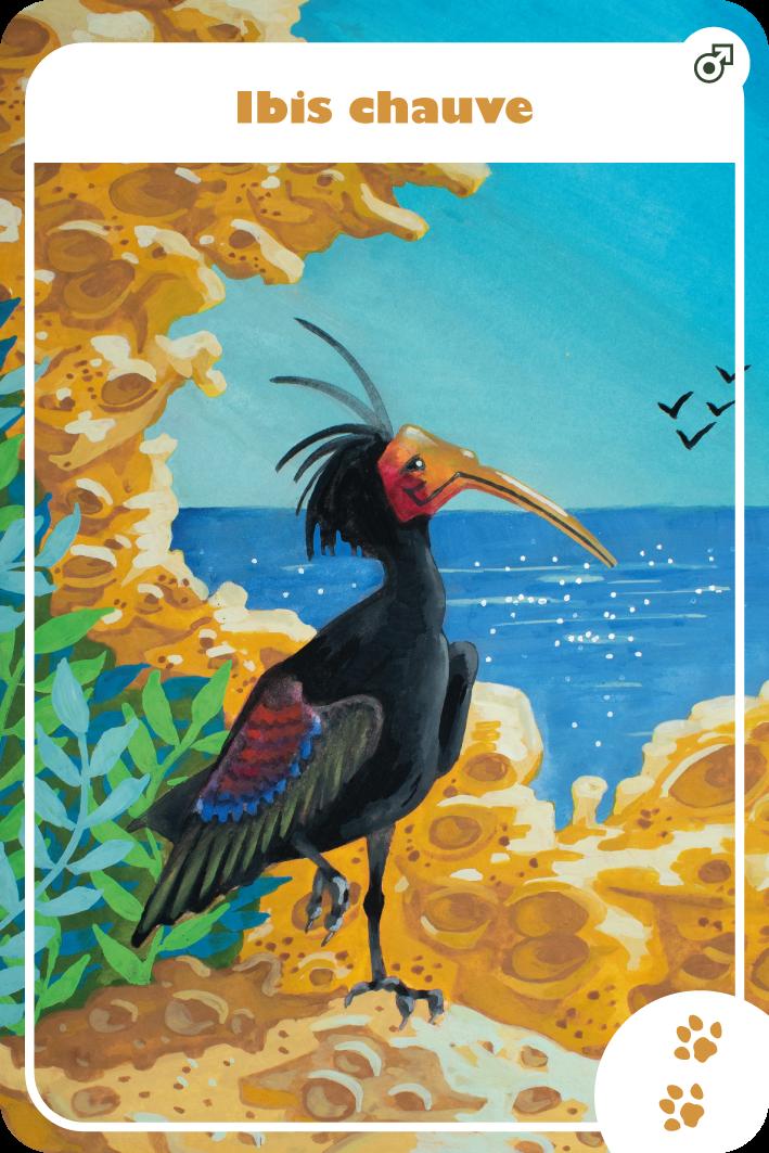 illustration gouache ibis chauve