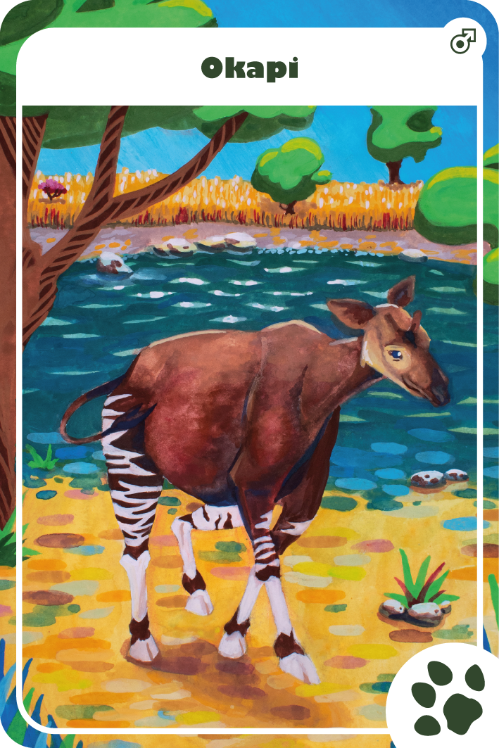 illustration gouache okapi